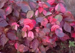 ornamental plants fresh flowers plants trees sri shirdi sai