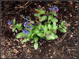 mark u0027s veg plot some colour in the garden at last
