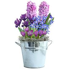shades of lavender gift basket garden bulbs tulip bulbs