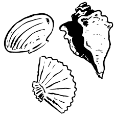 oranges clipart black and white free seashells clipart image 15662 orange seashell clip art
