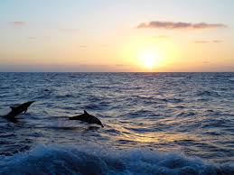 Seeking Dolphin Are You Seeking Adventure Event Venues San Diego