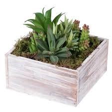 succulent arrangements faux succulent arrangements wayfair