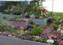 Rock Garden Plant Scottish Rock Garden Club Another Gold