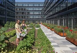 Houston Urban Gardeners - urban roof garden home decorating interior design bath