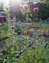 how to design vegetable garden vegetable garden technology how to plan your a garden trends