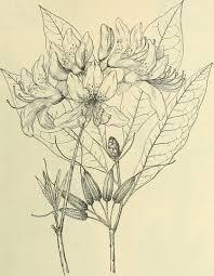 plants native to north america file annual wholesale offers of native north american ornamental