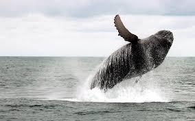 Oregon wildlife images Marine wildlife of the oregon coast lincoln city or stowaway jpg