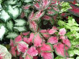 heat loving plants heat loving plants charlotte at home june 2017 charlotte nc