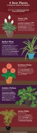 Office Plants by Houseplants For Your Office Space Fix Com