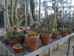 native plants of mexico greenhouse department of biology george mason university