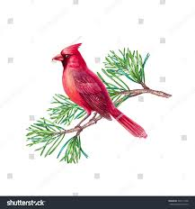 red cardinal bird christmas holiday design stock illustration