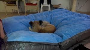 Comfortable Dog Comfortable Dog On Air Mattress Youtube