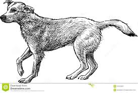 sketch of dog stock image image 37204851