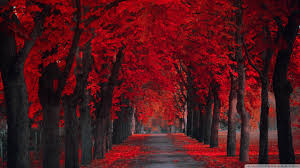 wallpaper extremly red leaves autumn 1920 x 1080 full hd 1920 x