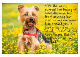 grieving the loss of a dog 31 quotes to help you mourn the loss of your dog grieving for dogs