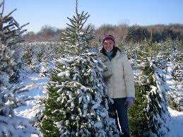 cut down your own christmas tree kidlist u2022 activities for kids