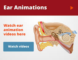 Outside Ear Anatomy Ear Infections U0026 Surgical Treatment Michigan Ear Institute