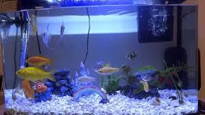 Home Aquarium by Fish Tank Aquarium Place In Auburn Hills Mi Best Home Ideas On
