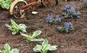 Diy Landscaping Ideas Diy Gardening U0026 Diy Landscaping Ideas U0026 Projects Hometalk