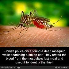 Mosquito Meme - damn that mosquito was a snitch meme by mercenary hero