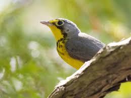 Audubon new york