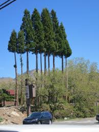 cool trees a great road trip to the sasquatch tavern and grill verdi nevada