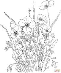 golden poppy or california poppy coloring page free printable