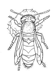 western yellow jacket for coloring page animal download for