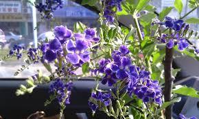 tiny purple flowers u2013 savingourboys info