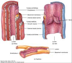 Human Anatomy Flashcards Human Anatomy Chart Picture Of The Human Anatomy Organs And Body