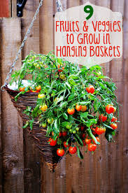fruit and vegetable baskets fruits and veggies to grow in hanging baskets