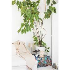 Design Home Media Network Greenterior Style Inside The Homes Of Plant Loving Creatives