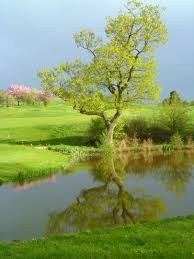 free images tree water nature sky sport meadow flower