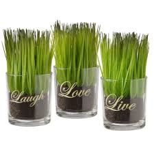 national tree company assortment small glass cup printed live laugh