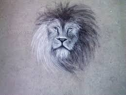 lion chalk drawing by fallunleashed on deviantart