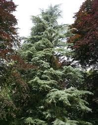 tree guide oregonforests