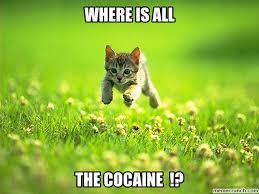 Cat Cocaine Meme - cat