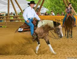 aktuelles styrian painthorse ranch