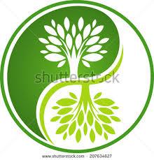 yin yang tree stock images royalty free images vectors