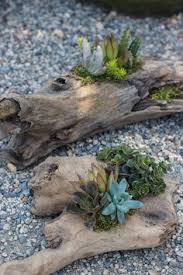 driftwood succulents by margheritta flora display pinterest