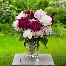 How To Revive Flowers In A Vase 17 Baking Soda Uses In The Garden Baking Soda For Plants