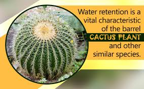 Plant Adaptation In Tropical Rainforest Barrel Cactus Adaptations