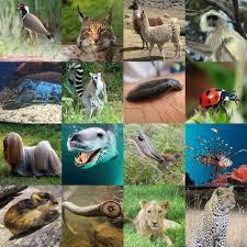 l animals khalid hoffman