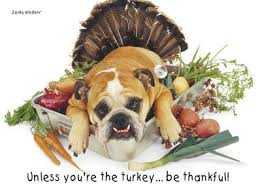turkey bulldog thanksgiving card thanksgiving
