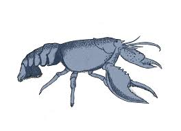 lobster drawings free download clip art free clip art on