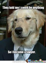Dog Lawyer Meme - lawyer by pickaflick meme center