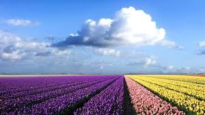 Beautiful Flowers Beautiful