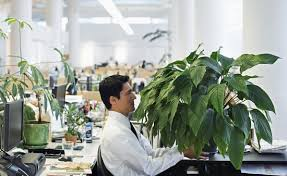 plante de bureau feng shui plantes de bureau feng shui feng shui bureau orientation