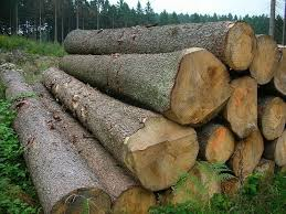mepal wood log buy wood logs mepal wood log american
