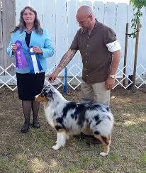 australian shepherd height chances u0027 r australian shepherds u2022 journey